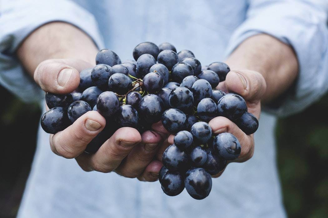 successful winery