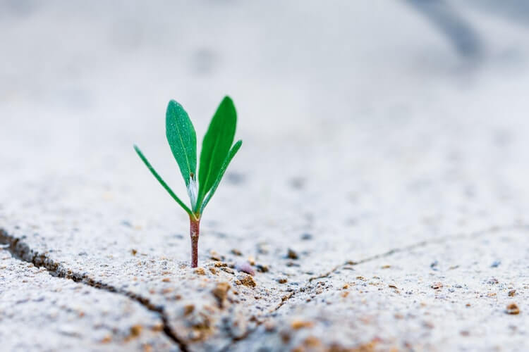 Baby plant growth strategy through rock